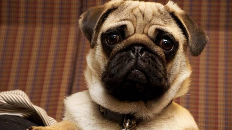 Σάλος στη Γερμανία: Οι Αρχές κατέσχεσαν και πούλησαν στο eBay σκυλάκι οικογένειας που είχε χρέη