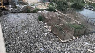 Αυτή είναι η ασθένεια που σκότωσε εκατομμύρια κυπρίνους στο Ιράκ