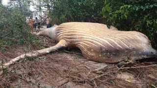 Τι δουλειά έχει το κουφάρι μιας φάλαινας μέσα σε ένα… δάσος;