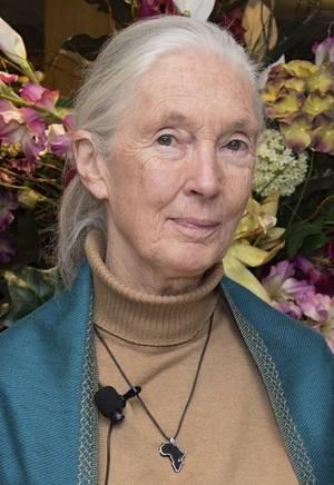 Η Dame Jane Morris Goodall, είναι  Βρετανίδα ανθρωπολόγος και  Αγγελιοφόρος της Ειρήνης των Ηνωμένων Εθνων.  Θεωρείται ότι είναι  η πιο εξειδικευμένη στον κόσμο επιστήμονας που μελετά τους χιμπατζήδες στην κοινωνική και οικογενειακή τους ζωή. Εργάζεται επ