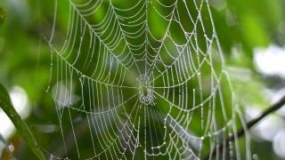 Σπάνιες αράχνες ανακαλύφθηκαν στην Αυστραλία