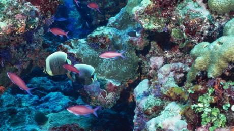 Εντοπίστηκε ο πρώτος κοραλλιογενής ύφαλος στη Μεσόγειο