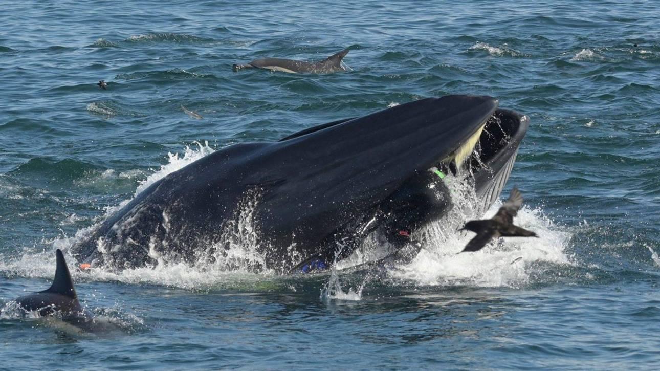 Βίντεο: Η απίστευτη στιγμή που δύτης παραλίγο να γίνει το… γεύμα φάλαινας