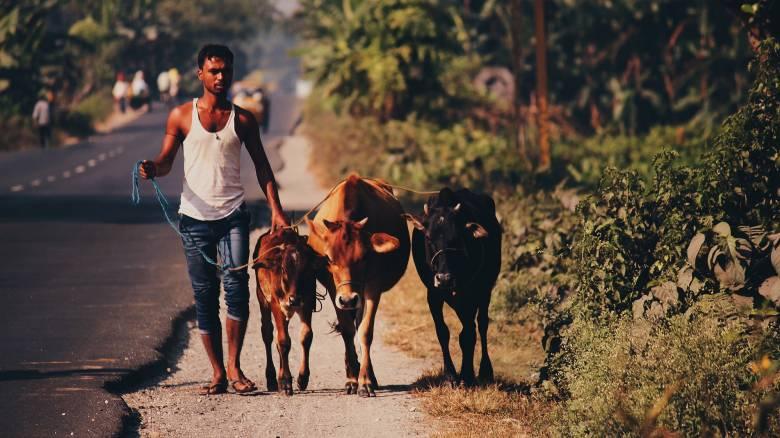 Ινδουιστής έφαγε καταλάθος βοδινό και ζητά αποζημίωση για να εξαγνιστεί