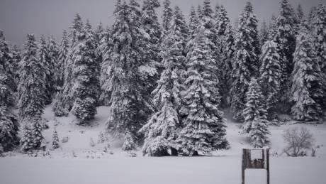 Καιρός: Στα λευκά τα ορεινά των Τρικάλων (vid)