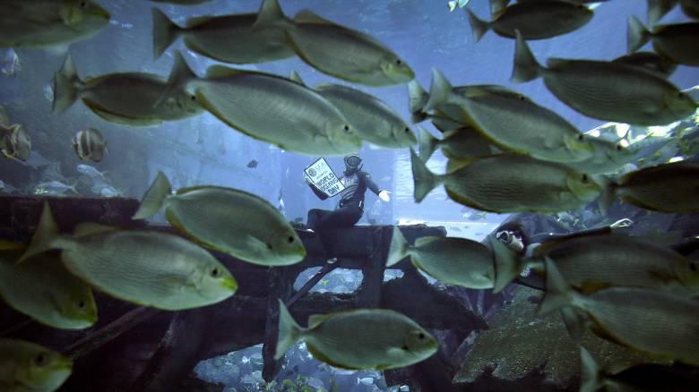 Τα θαλάσσια είδη πνίγονται στο πλαστικό: Η συγκλονιστική καμπάνια που έγινε viral