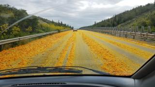 Ο αυτοκινητόδρομος Λεμεσού - Λευκωσίας γέμισε… πορτοκάλια