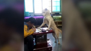 Άγρυπνος φρουρός: Σκύλος επιτηρεί μαθήτρια την ώρα που διαβάζει