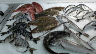 Γιατί πρέπει να τρώμε θαλασσινά - Ποιες είναι οι ευεργετικές ιδιότητές τους