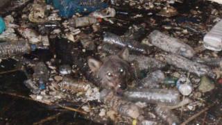 Διάσωση λύκου που είχε εγκλωβιστεί στα νερά αρδευτικού καναλιού