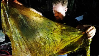Φάλαινα πέθανε από «γαστρικό σοκ» - Είχε 40 κιλά από πλαστικές σακούλες στο στομάχι της