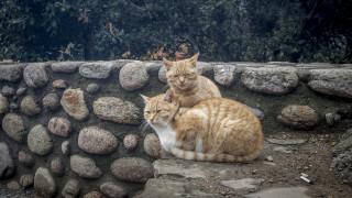 Οργή στην Κρήτη: Γυναίκα δηλητηρίασε γάτες και έδωσε τη συνταγή για τις φόλες στο Facebook