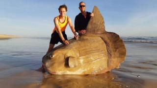 Ένα ψάρι - «γίγαντας» εντοπίστηκε στην Αυστραλία
