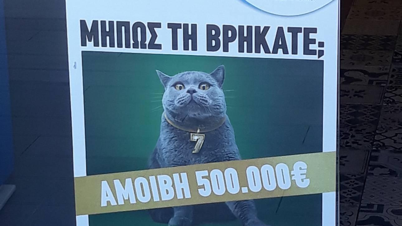Kυνήγι σε όλη την Ελλάδα για μία γάτα με αμοιβή 500.000 ευρώ