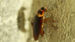 Μίσιγκαν: Αυτοπυροβολήθηκε στην προσπάθειά του να… σκοτώσει κατσαρίδα