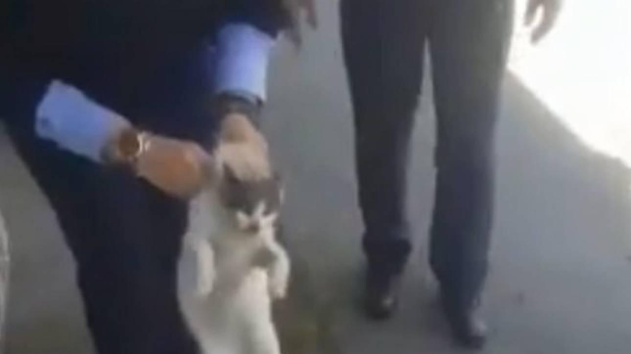 Κύπρος: Γατάκι πήγε μόνο του στο αστυνομικό τμήμα για... βοήθεια