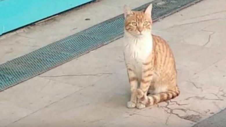 Ο «φόβος και ο τρόμος» της Πόλης: Αυτή είναι η πιο τσαντισμένη γάτα στον πλανήτη!
