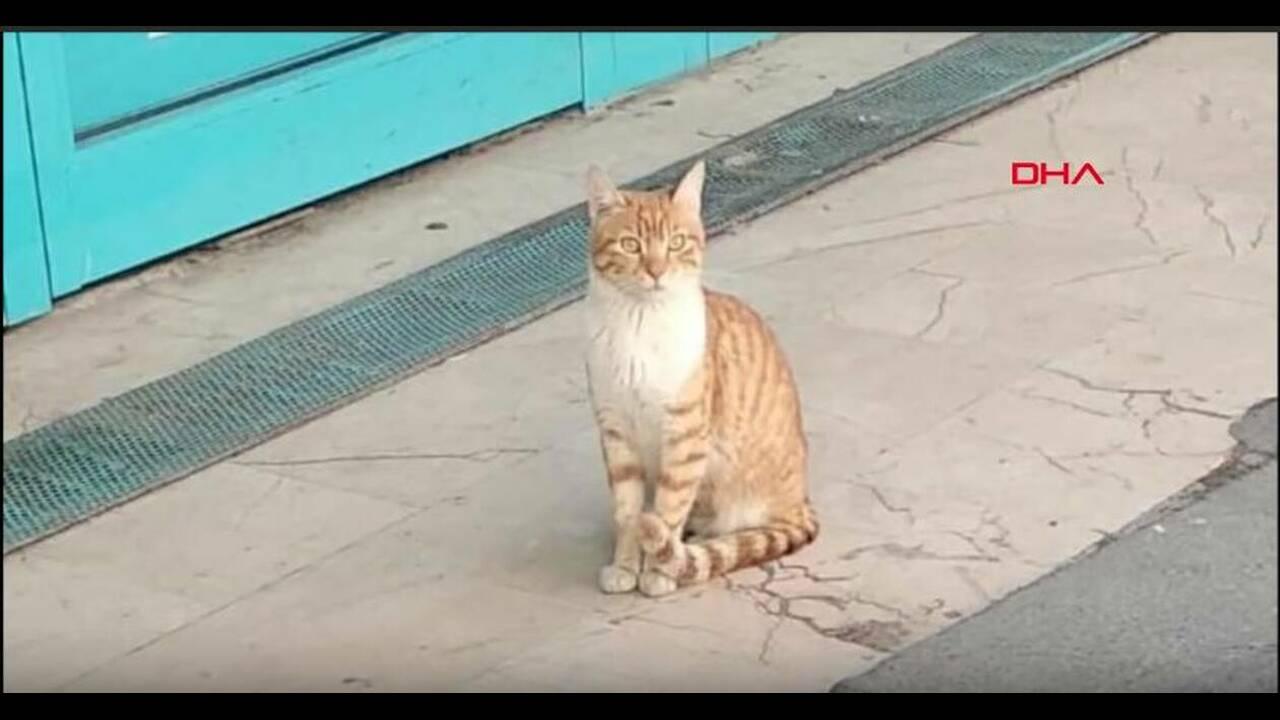 https://cdn.cnngreece.gr/media/news/2019/03/25/170464/photos/snapshot/cat.JPG