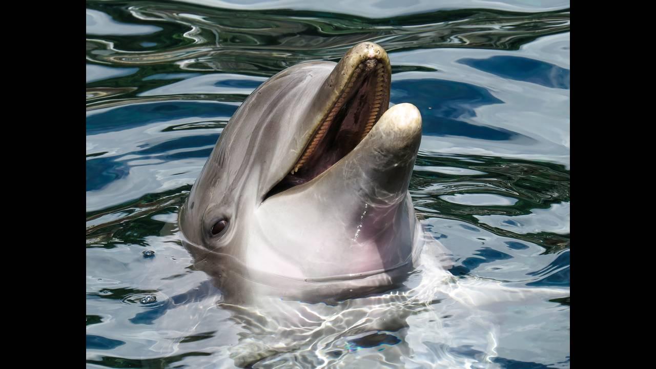 https://cdn.cnngreece.gr/media/news/2019/03/27/170664/photos/snapshot/dolphin-1611509_1920.jpg