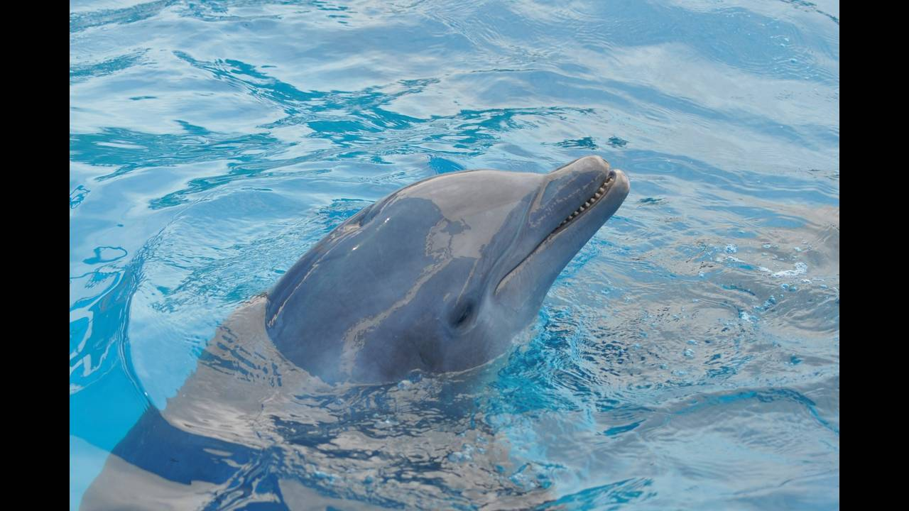 https://cdn.cnngreece.gr/media/news/2019/03/27/170664/photos/snapshot/dolphin-989658_1920.jpg