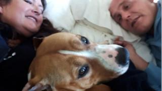 Χαμένος στο μεγαλύτερο αεροδρόμιο του κόσμου: Η περιπέτεια ενός σκύλου που το'σκασε από πτήση