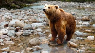 Σκληρό βίντεο: Κυνηγοί σκοτώνουν αρκούδα και τα αρκουδάκια της σε χειμερία νάρκη