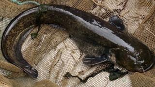Ψάρι - δολοφόνος έτρωγε... πάπιες σε λίμνη εμπορικού κέντρου
