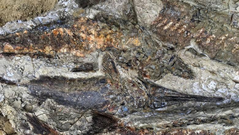 Ανακαλύφθηκαν απολιθώματα 66 εκατ. ετών από την ημέρα της «Αποκάλυψης»