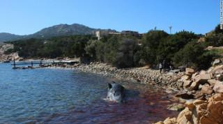 Έγκυος φάλαινα ξεβράστηκε νεκρή σε ιταλική ακτή – Είχε 22 κιλά πλαστικών στο στομάχι της
