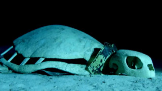 Εντυπωσιακές εικόνες: Υποβρύχιο «νεκροταφείο» για χελώνες στον Ινδικό Ωκεανό