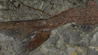 Βρέθηκαν απολιθώματα 66 εκατομμυρίων χρόνων από την ημέρα της «Αποκάλυψης»