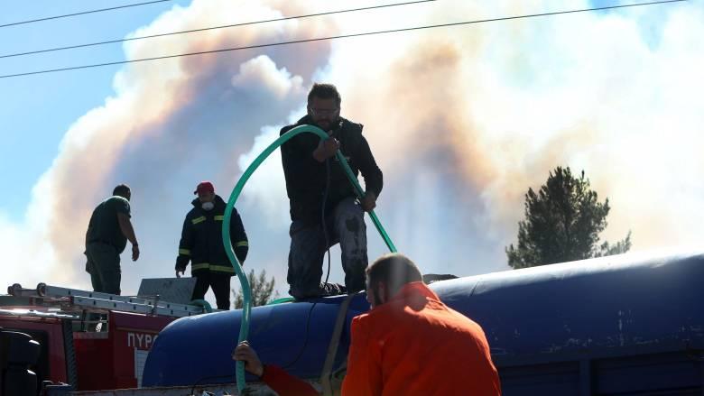 Ηλεία: Μεγάλη πυρκαγιά καίει το προστατευόμενο δάσος της Στροφυλιάς