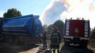 Ηλεία: Συνεχίζεται η «μάχη» με τις φλόγες στο προστατευόμενο δάσος της Στροφυλιάς