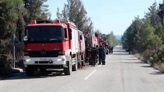 Ηλεία: Σε ύφεση η φωτιά στο προστατευόμενο δάσος της Στροφυλιάς