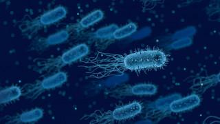 Δημιουργήθηκε το πρώτο γονιδίωμα βακτηρίου αποκλειστικά από υπολογιστή