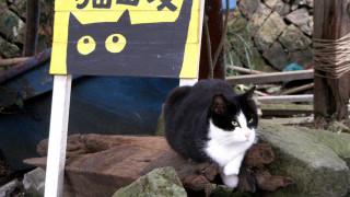 Φουντωτοί… καταληψίες: Γάτες οι μόν(ιμ)οι κάτοικοι ενός ολόκληρου χωριού