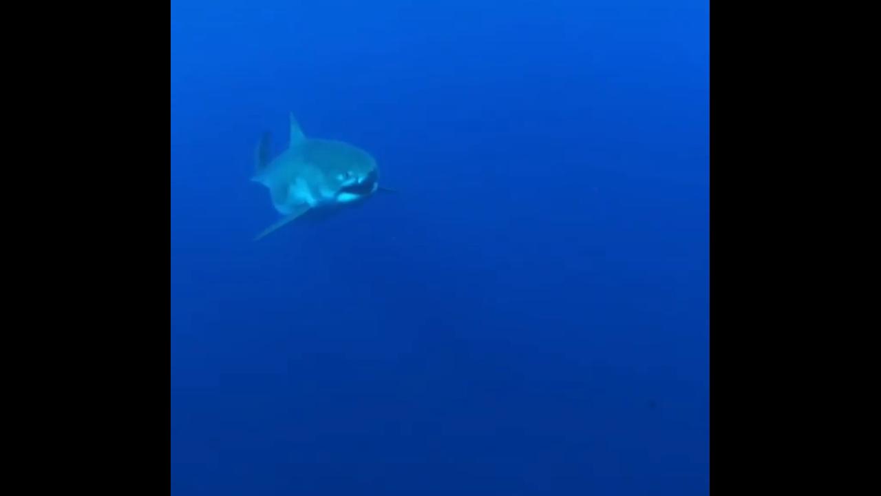 https://cdn.cnngreece.gr/media/news/2019/04/04/171677/photos/snapshot/shark.PNG