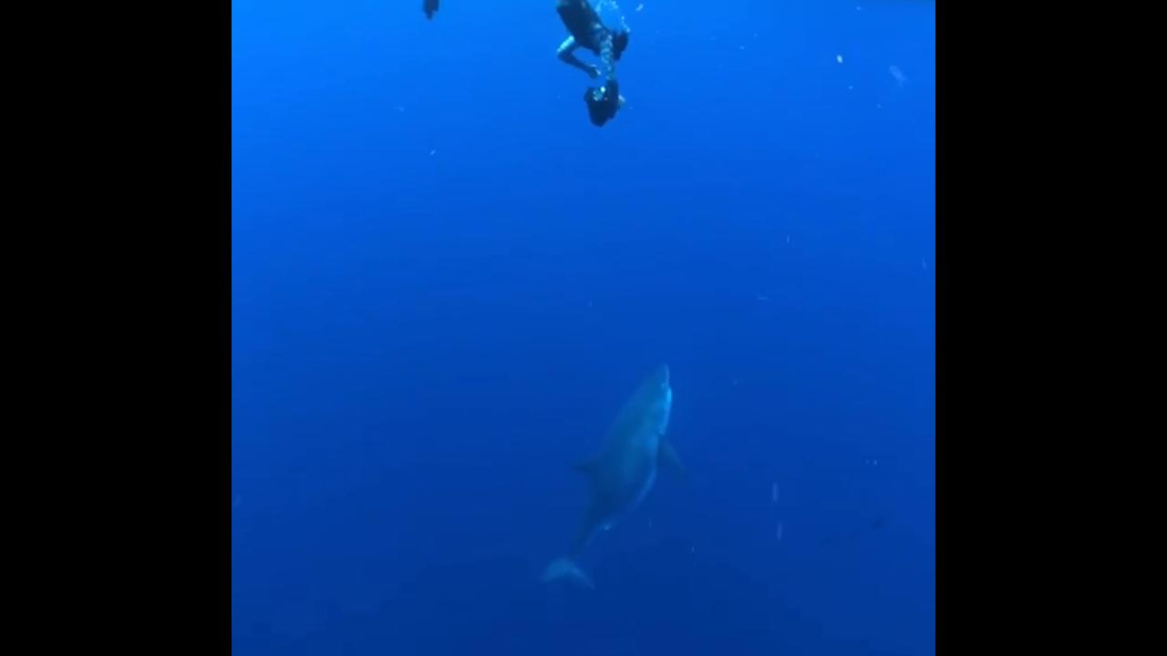 https://cdn.cnngreece.gr/media/news/2019/04/04/171677/photos/snapshot/shark2.PNG