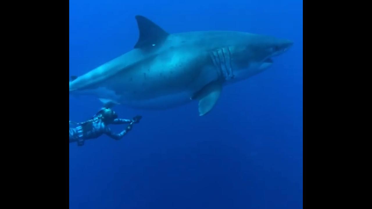 https://cdn.cnngreece.gr/media/news/2019/04/04/171677/photos/snapshot/shark3.PNG