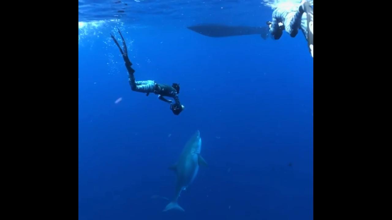 https://cdn.cnngreece.gr/media/news/2019/04/04/171677/photos/snapshot/shark4.PNG