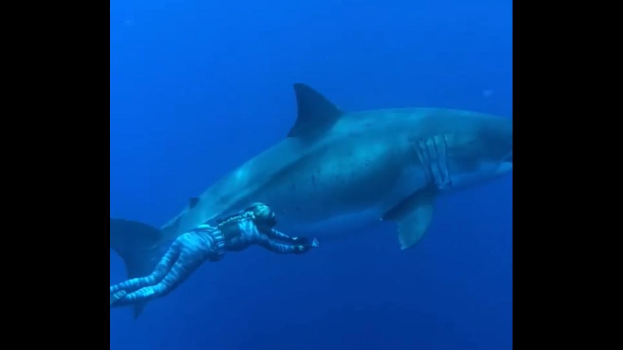 https://cdn.cnngreece.gr/media/news/2019/04/04/171677/photos/snapshot/shark6.PNG