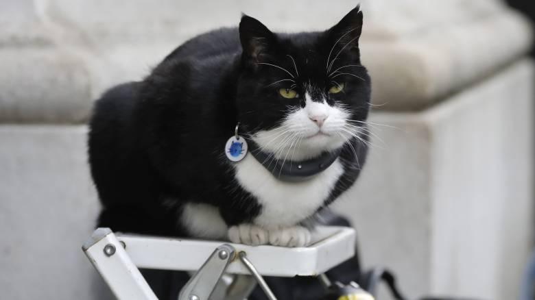 Η επιστήμη... νιαούρισε: Οι γάτες μπορούν να αναγνωρίσουν το όνομά τους!