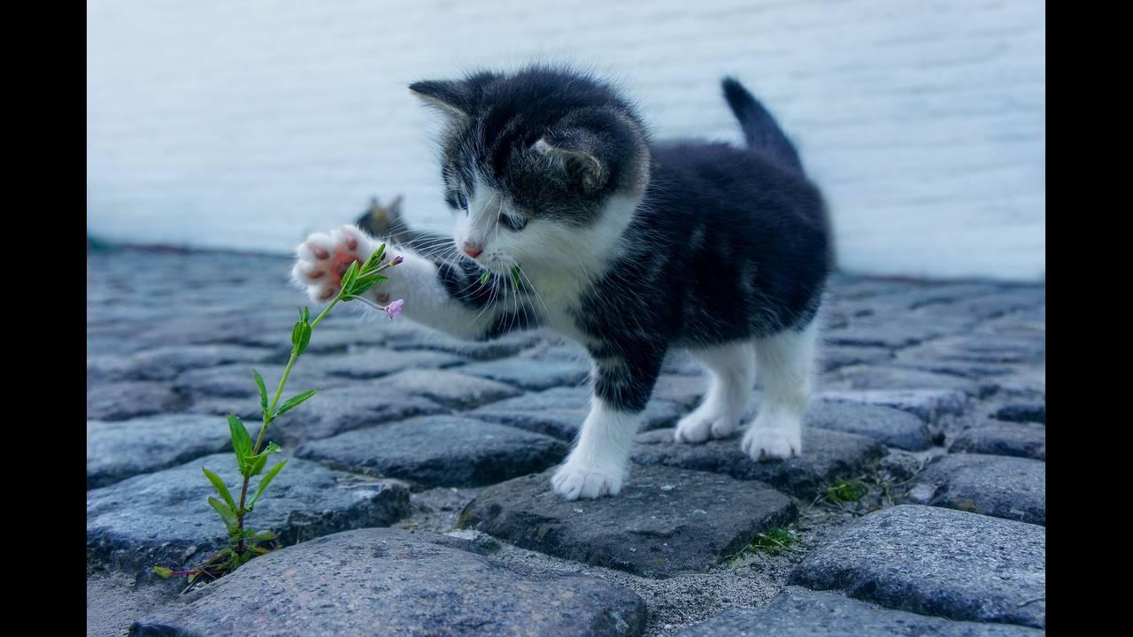 https://cdn.cnngreece.gr/media/news/2019/04/04/171757/photos/snapshot/cat-2536662_1920.jpg