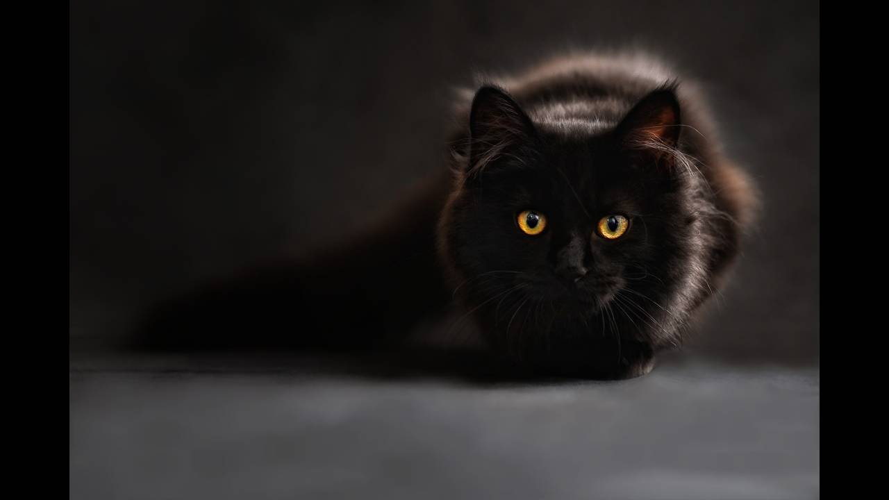 https://cdn.cnngreece.gr/media/news/2019/04/04/171757/photos/snapshot/cat-694730_1920.jpg