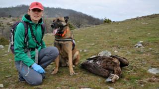 Θράκη: Θάνατος σπάνιων αρπακτικών πουλιών από δηλητηριασμένο δολώματα