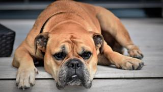Κτηνωδία στη Λάρισα: Σκότωσαν αδέσποτο σκύλο με αλυσοπρίονο