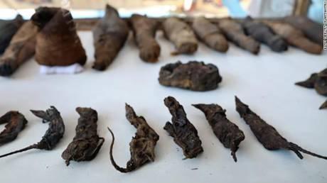 Αίγυπτος: Ανακαλύφθηκε τάφος με 50 μουμιοποιημένα ζώα