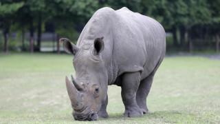 Da Zhuang: Ο μικρός λευκός ρινόκερος έκανε το ντεμπούτο του στο πάρκο Τσίμελονγκ της Κίνας