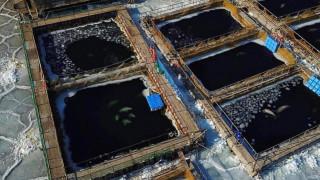 Συμφωνία για την απελευθέρωση των φυλακισμένων φαλαινών της Ρωσίας