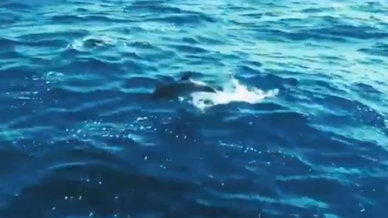 Απάντηση της Τουρκίας για τα νεκρά δελφίνια στην άσκηση «Γαλάζια Πατρίδα»